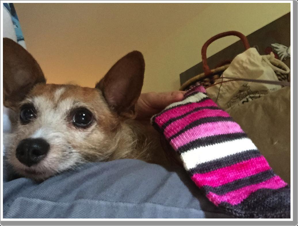 Pink Sock 1