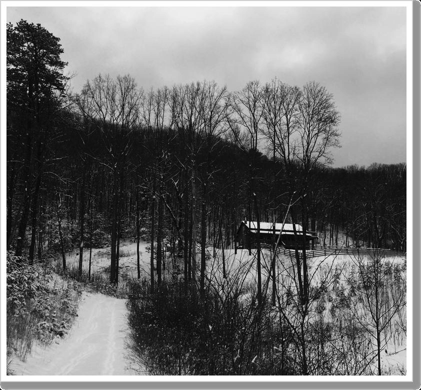 Snow Day web