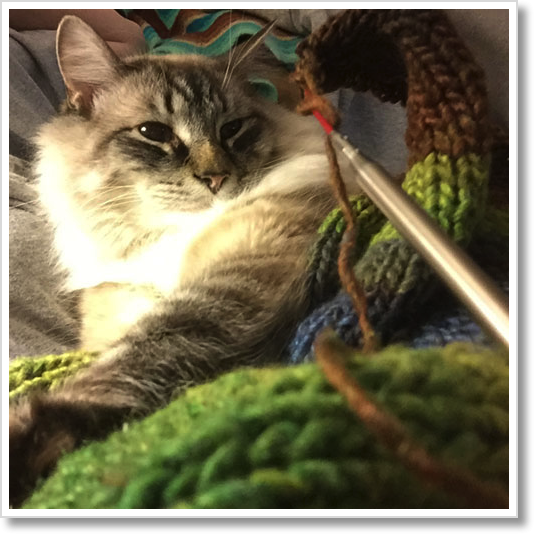 kitty-knitting