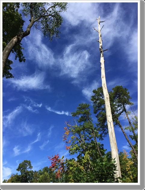 fall-woodpecker-tree